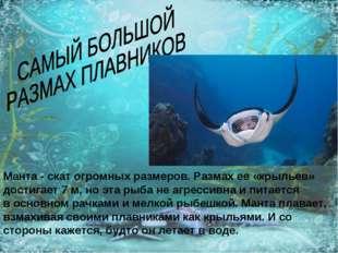 Манта - скат огромных размеров. Размах ее «крыльев» достигает 7 м, но эта рыб