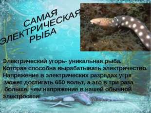 Электрический угорь- уникальная рыба. Которая способна вырабатывать электриче