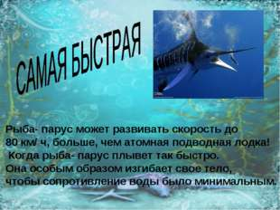 Рыба- парус может развивать скорость до 80 км/ ч, больше, чем атомная подводн