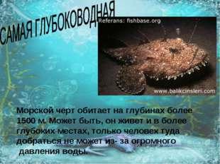 Морской черт обитает на глубинах более 1500 м. Может быть, он живет и в более