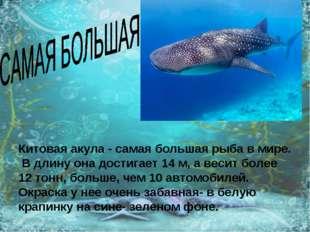 Китовая акула - самая большая рыба в мире. В длину она достигает 14 м, а веси