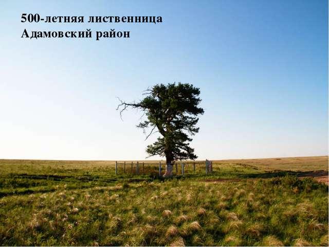 500-летняя лиственница Адамовский район