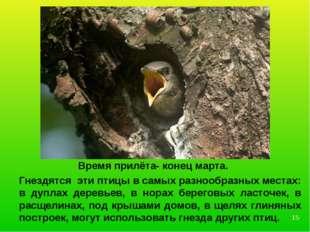 Гнездятся эти птицы в самых разнообразных местах: в дуплах деревьев, в норах