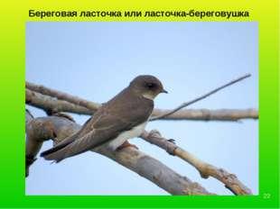 Береговая ласточка или ласточка-береговушка *