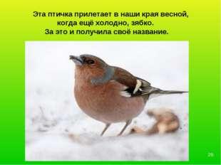 Эта птичка прилетает в наши края весной, когда ещё холодно, зябко. За это и