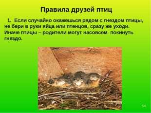 Правила друзей птиц 1. Если случайно окажешься рядом с гнездом птицы, не бери