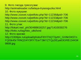 * 9. Фото гнезда трясогузки: http://animalreader.ru/belaya-tryasoguzka.html 1