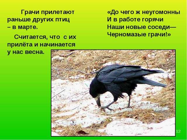 Грачи прилетают раньше других птиц – в марте. Считается, что с их прилёта и...