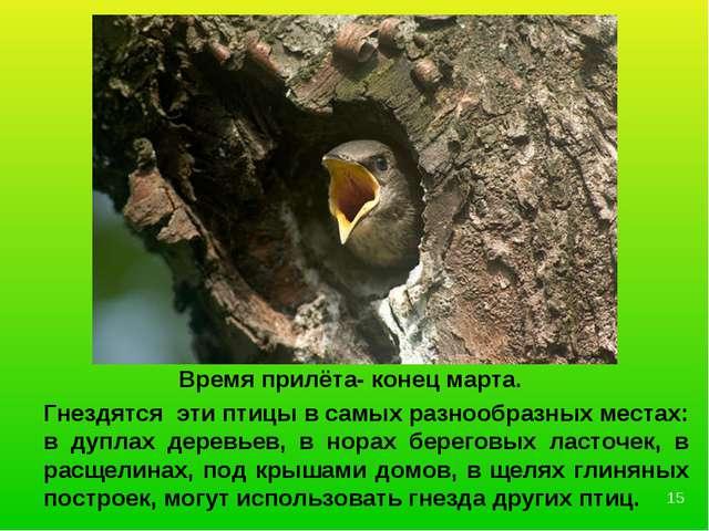 Гнездятся эти птицы в самых разнообразных местах: в дуплах деревьев, в норах...