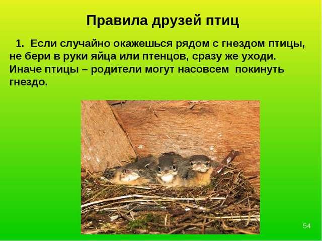 Правила друзей птиц 1. Если случайно окажешься рядом с гнездом птицы, не бери...