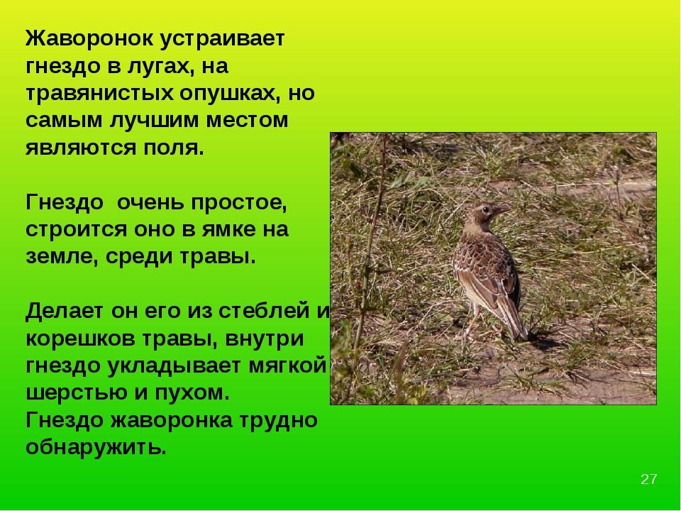 Жаворонок устраивает гнездо в лугах, на травянистых опушках, но самым лучшим...