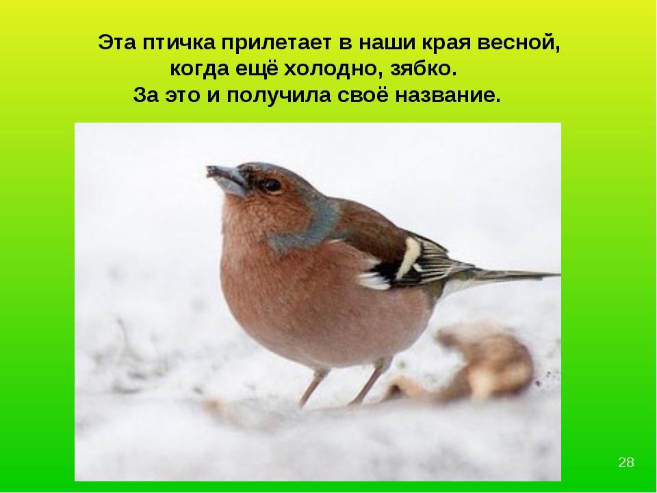 Эта птичка прилетает в наши края весной, когда ещё холодно, зябко. За это и...