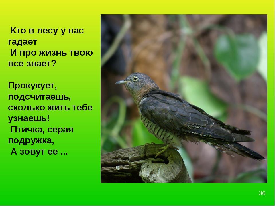 Кто в лесу у нас гадает И про жизнь твою все знает? Прокукует, подсчитаешь,...