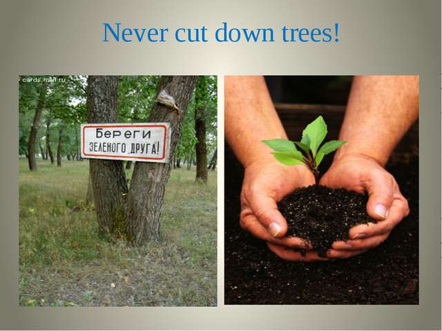 Never cut down trees!