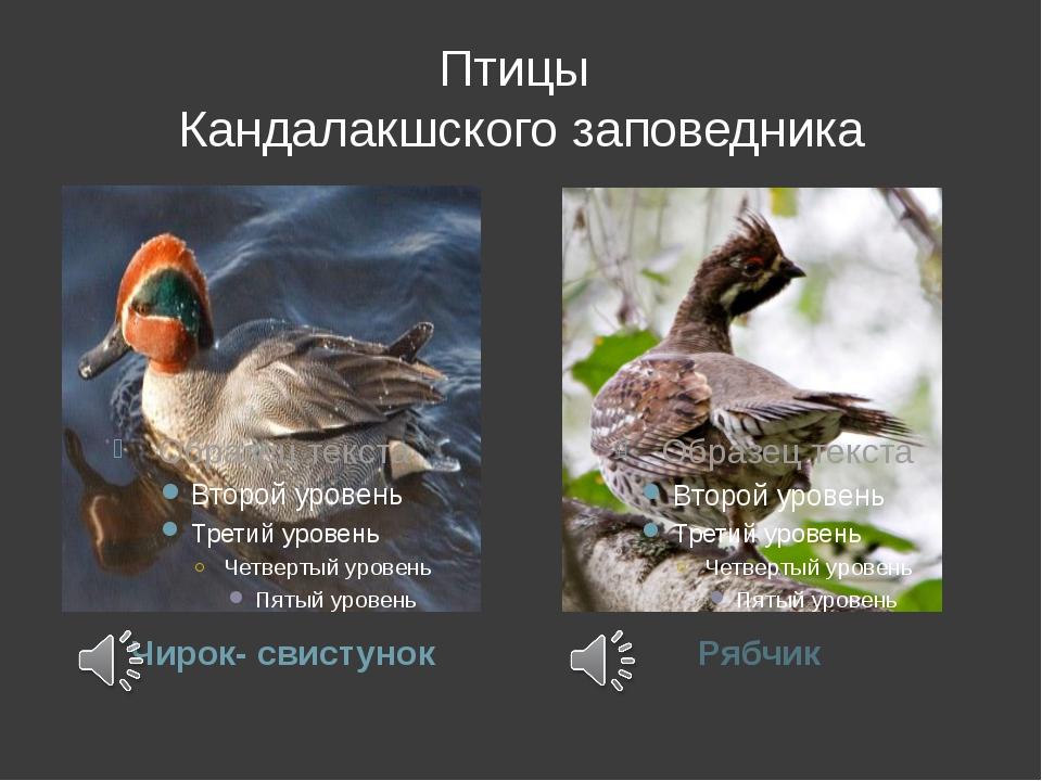 Птицы Кандалакшского заповедника Чирок- свистунок Рябчик