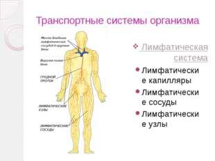 Транспортные системы организма Кровеносная система Лимфатическая система Серд