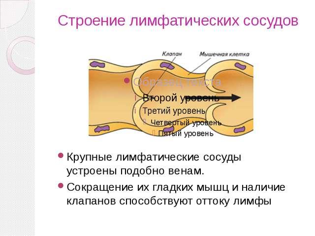Строение лимфатических сосудов Крупные лимфатические сосуды устроены подобно...