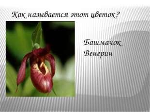 Как называется этот цветок? Башмачок Венерин