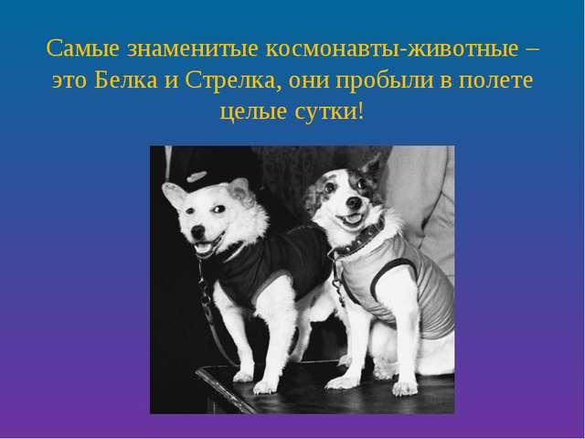 Самые знаменитые космонавты-животные – это Белка и Стрелка, они пробыли в пол...