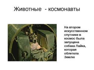 Животные - космонавты На втором искусственном спутнике в космос была запущена