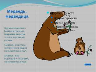 Медведь, медведица Крупное животное с большим грузным, покрытым шерстью телом