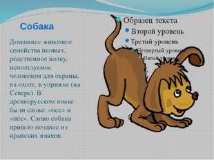 Собака Домашнее животное семейства псовых, родственное волку, используемое че