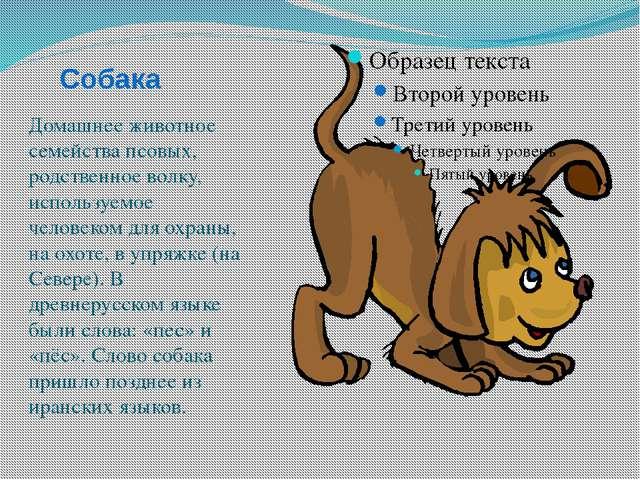 Собака Домашнее животное семейства псовых, родственное волку, используемое че...