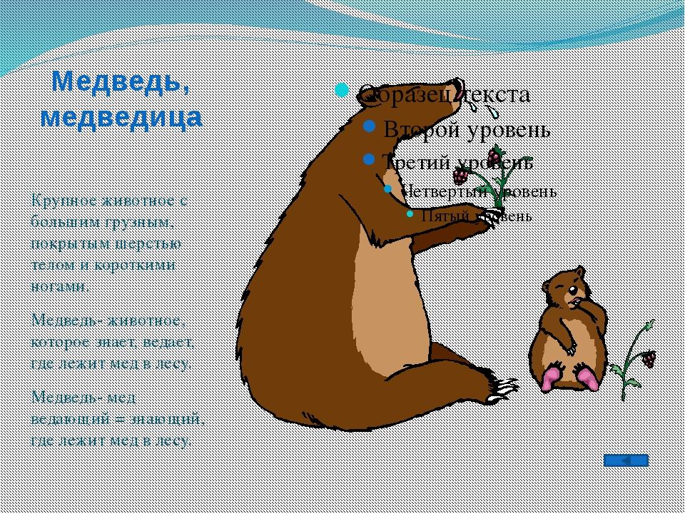 Медведь, медведица Крупное животное с большим грузным, покрытым шерстью телом...