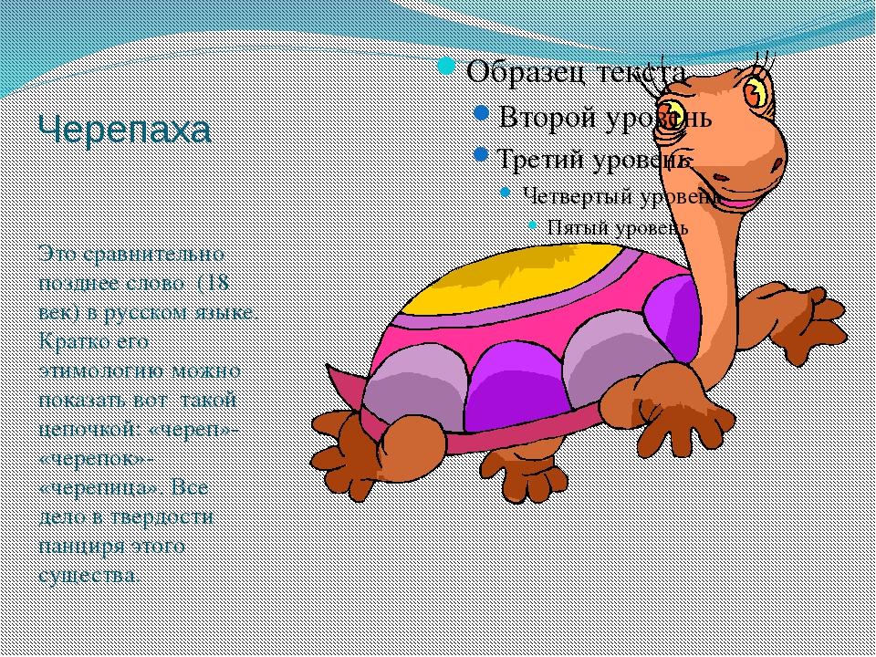 Черепаха Это сравнительно позднее слово (18 век) в русском языке. Кратко его...