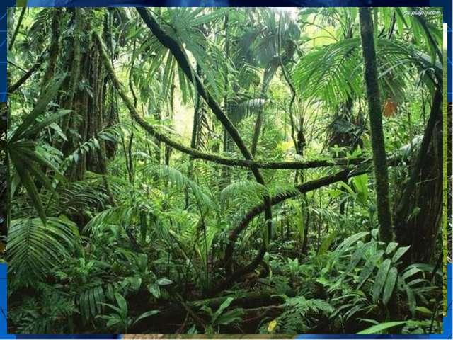Сельва Амазонки