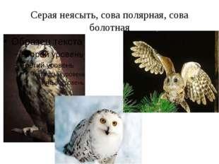 Серая неясыть, сова полярная, сова болотная