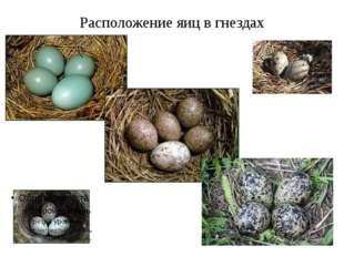 Расположение яиц в гнездах