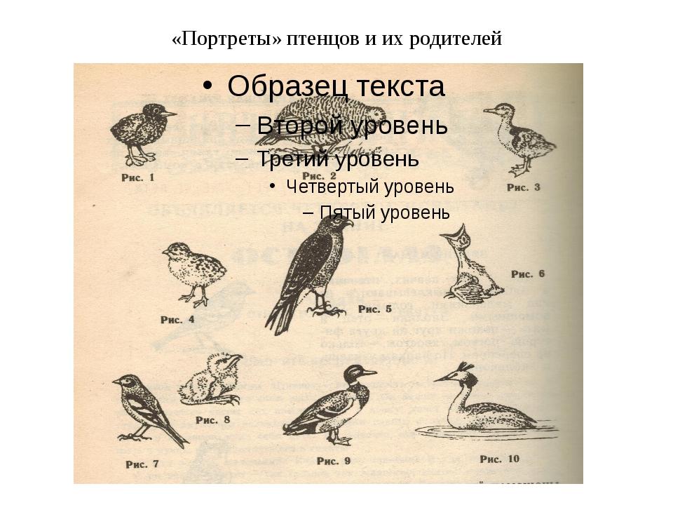 «Портреты» птенцов и их родителей