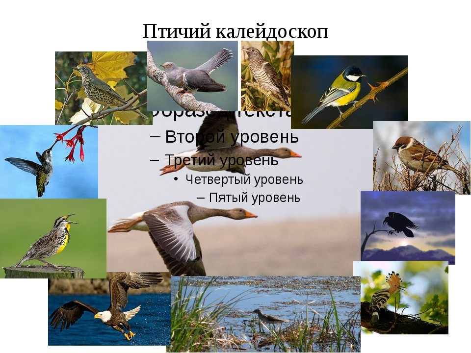 Птичий калейдоскоп