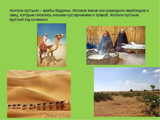 Жители пустыни – арабы-бедуины. Испокон веков они разводили верблюдов и овец,...