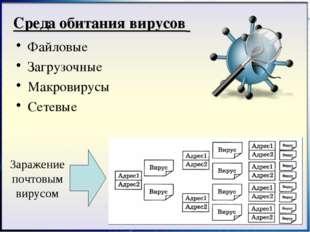 Файловые Загрузочные Макровирусы Сетевые Среда обитания вирусов Заражение поч