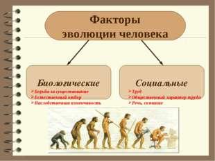 Факторы эволюции человека Биологические Социальные Борьба за существование Ес