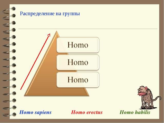 Homo sapiens Homo habilis Homo erectus Распределение на группы