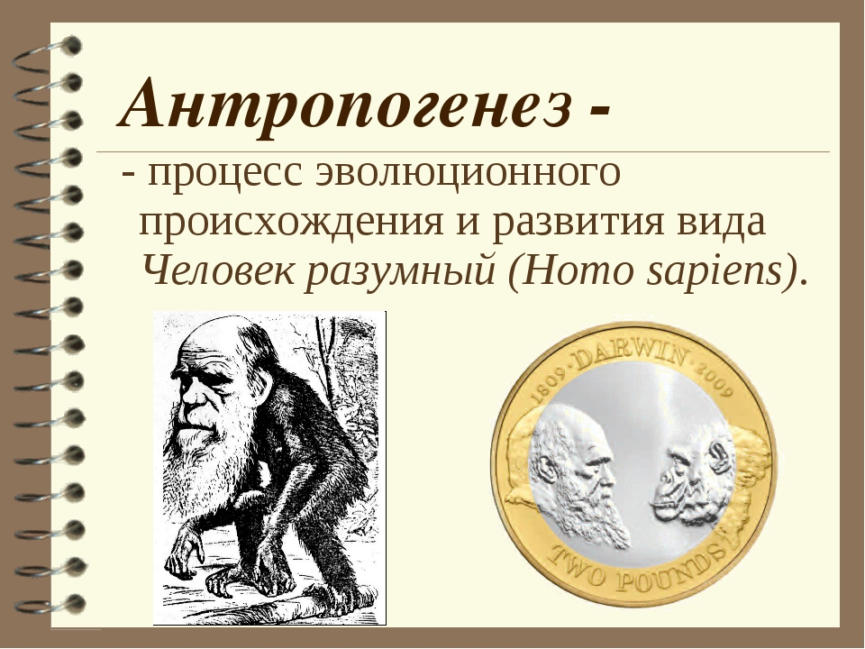 Антропогенез - - процесс эволюционного происхождения и развития вида Человек...