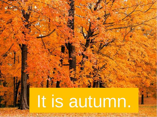 It is autumn.