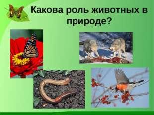 Какова роль животных в природе?