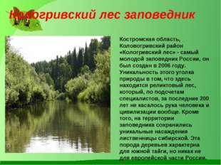 Костромская область, Коловогривский район «Кологривский лес» - самый молодой