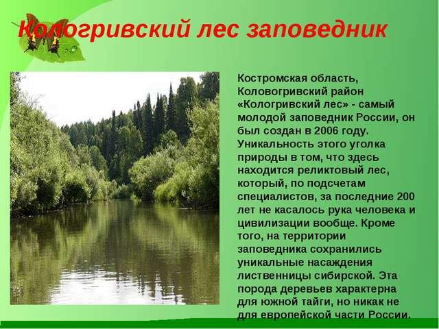 Костромская область, Коловогривский район «Кологривский лес» - самый молодой...