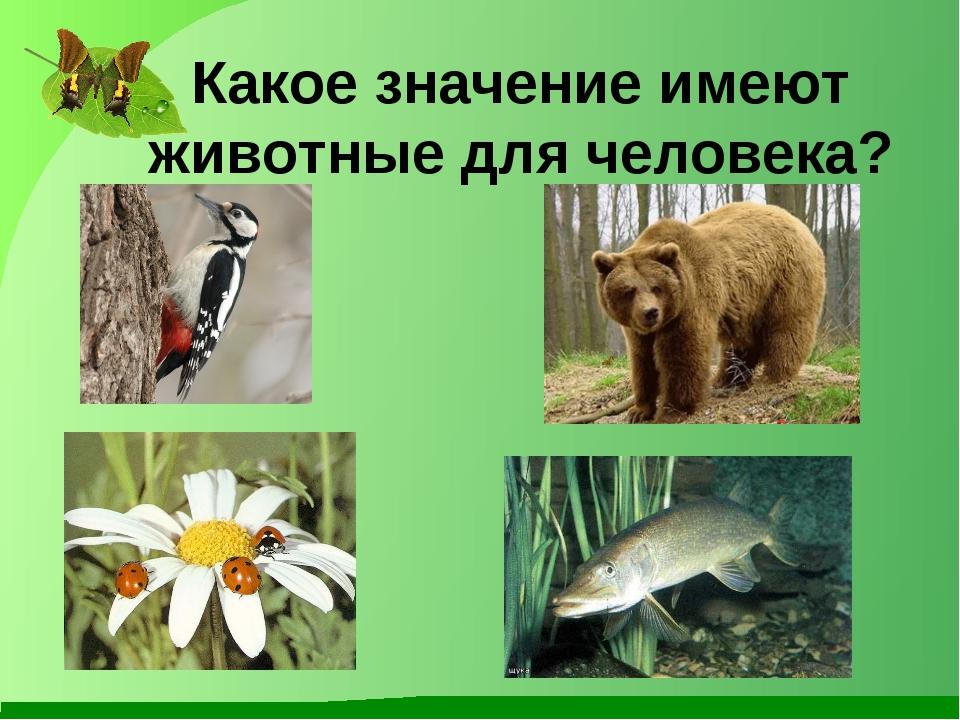 Какое значение имеют животные для человека?