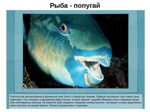 Рыба - попугай