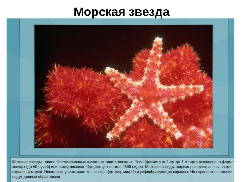 Морская звезда