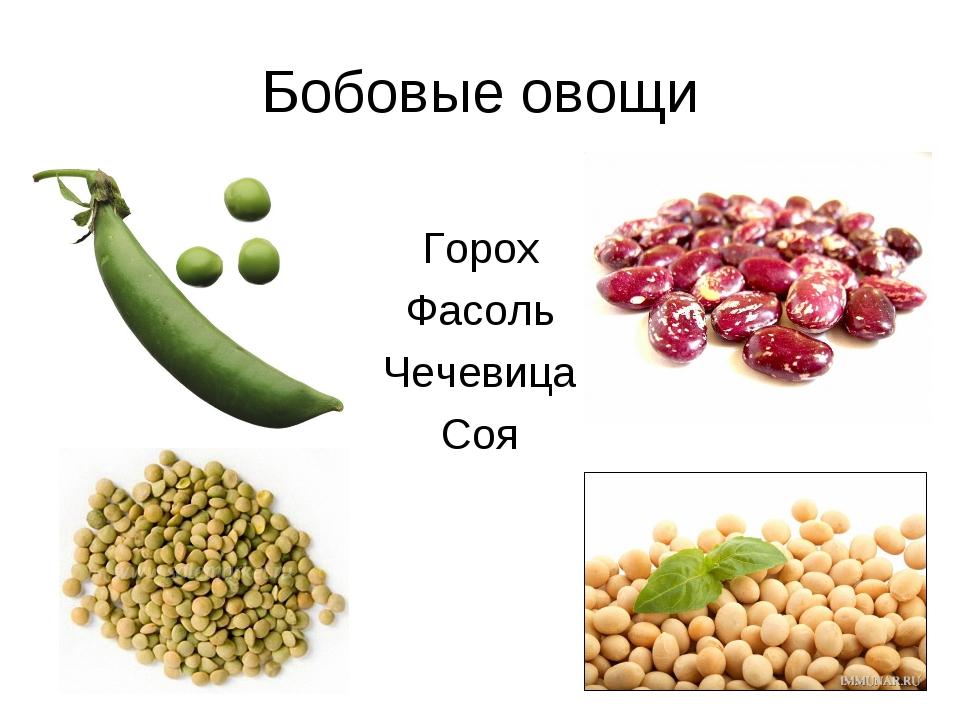 Бобовые овощи Горох Фасоль Чечевица Соя