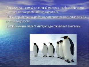 Антарктида – самый холодный материк, на большей части которого нет ни растен