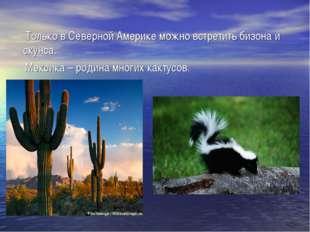 Только в Северной Америке можно встретить бизона и скунса. Мексика – родина