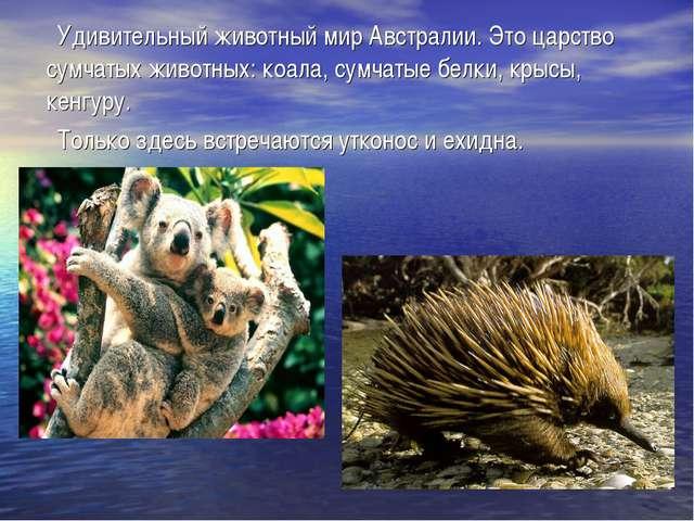 Удивительный животный мир Австралии. Это царство сумчатых животных: коала, с...
